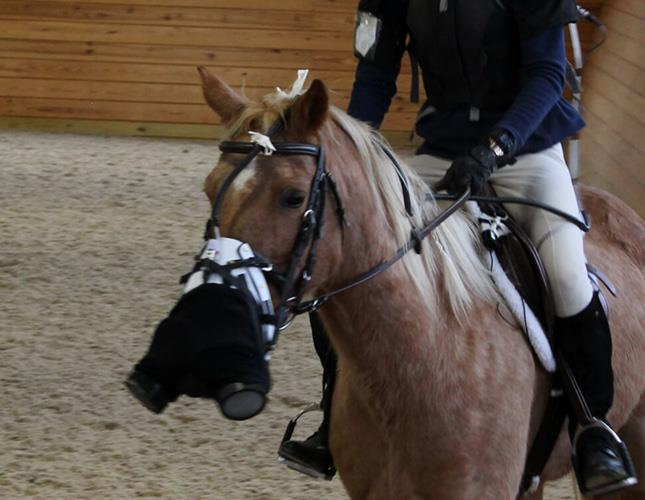 West-Chester-Equestrian-Toxicology-Lab-Web-PP